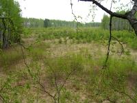 Вид на поместье с дерева
