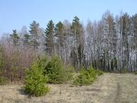 Дорога в поселении