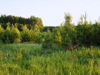 Поля и рощи поселения