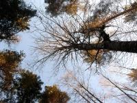 Небо зимнего леса