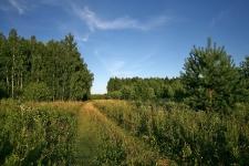 Дорога на первом поле