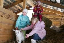 Чердак с козлятами
