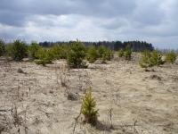 Весной, после выделения земли