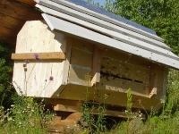 Колода с пчелами